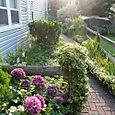 Aunt Cathy's garden