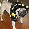 Mad Bumblebee