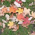 Surprisingly pretty leaves