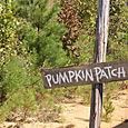Pumpkin patch ahead
